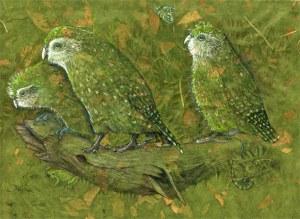 kakapo-natural